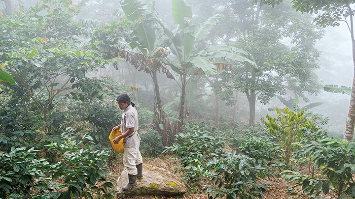 세계 미식탐험: 커피 머그에 콜롬비아 담기