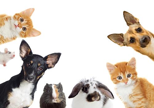 반려동물 문화 | 함께 살 준비를 마쳤나요?