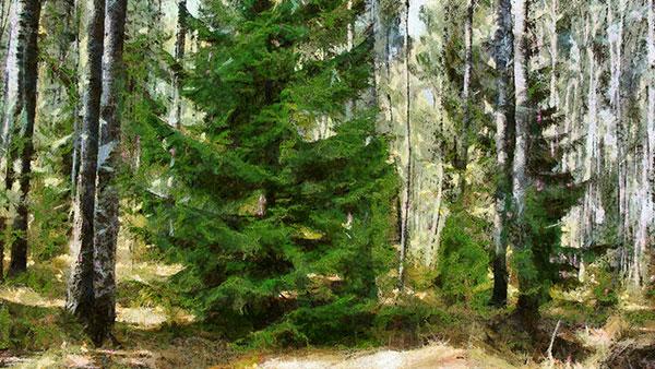 숲 | 기후 재앙의 방패막?!