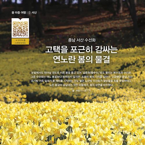 [봄 마중 여행 ①] 고택을 포근히 감싸는 연노란 봄의 물결, 충남 서산 수선화