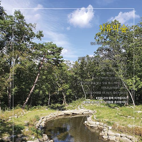 [치유의숲 ①] 길쭉길쭉 나무 아래 청정공기 마시며 힐링 업~ 국립김천치유의숲