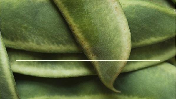 콩(bean)