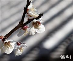귀로 향기를 들어야 하는 암향의 꽃 | 고규홍