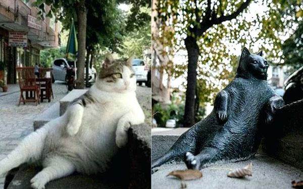 '고양이 천국' 터키, 그 참혹한 과거