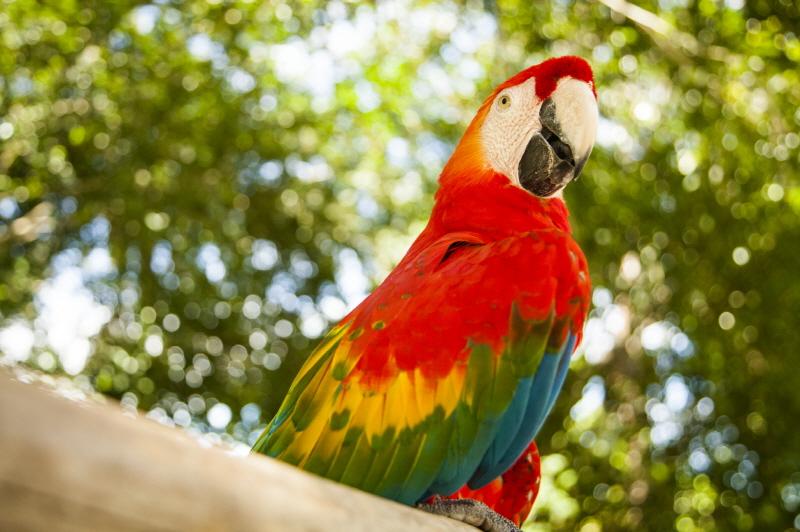 페루 아마존으로 떠나는 이색 여름 휴가