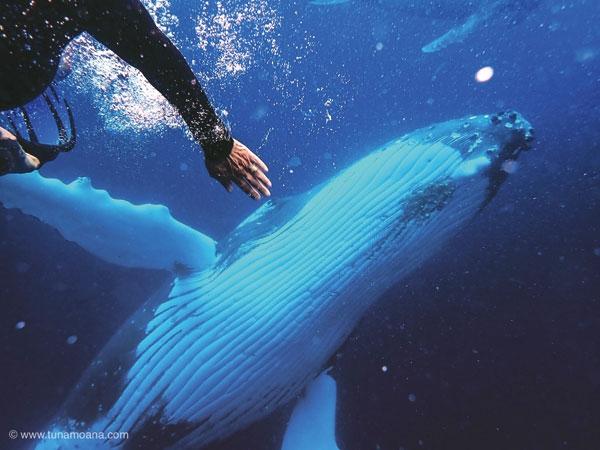 [몰라서 몰랐던 태평양] 자, 떠나자~ 고래 잡으러~ 고래의 꿈을 찾아 '통가'