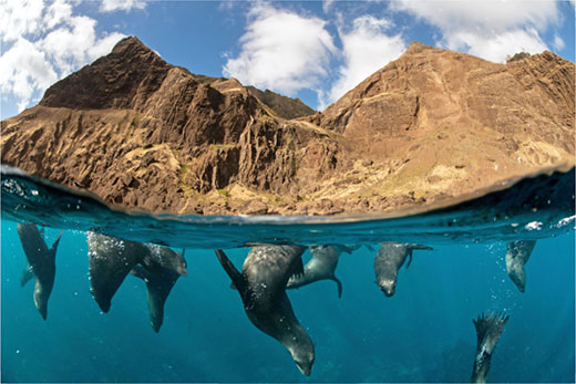 바다의 보물을 지켜라