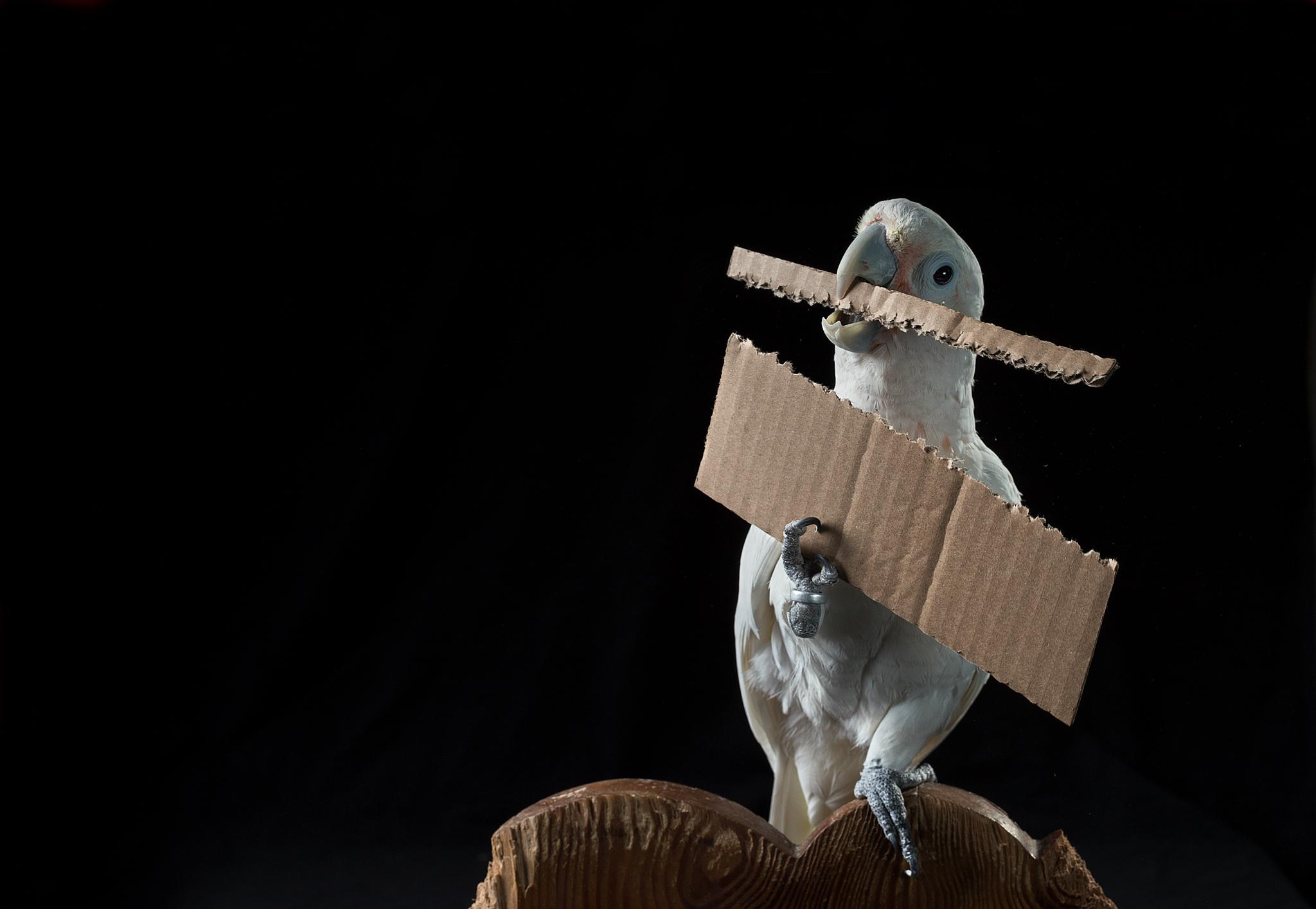 영리한 새들